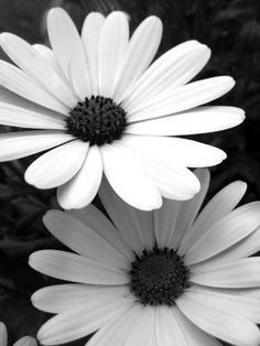black and white flowers. Black and white photography