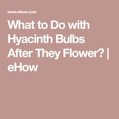 What to Do with Hyacinth Bulbs After They Flower?   eHow