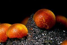 スペインのラ・パロマ鉱山で見つかった鉱物のカコクセナイト(18倍)