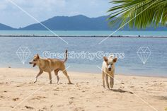 Wild dogs in tropical paradise – CreativityGems