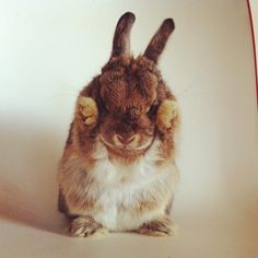 Rabbit, Bunny, Bunnies, Hare, Lapin, Conejo, кролик, Coniglio, Coelho, Kaninchen, 兔, ウサギ, and that never to be lived down, FooFoo