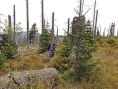 Auf zum nächsten Gipfel Fleckenstein Berg Berg, Mountains, Nature, Travel, Rocks, Hiking, Stones, Voyage, Viajes