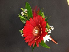Red gerbera daisy bout. Flowers For Men, Fall Flowers, Flower Corsage, Wrist Corsage, Gerbera Daisy Wedding, Wedding Flowers, Daisy Boutonniere, Boutonnieres, Red Daisy