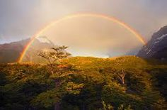 The Most Beautiful Rainbow S Photo Never Seen Samoa By Ming Mong . Beautiful Background Rainbow Lines Hd Photos Hd Famous Wallpapers. Rainbow Photography, Nature Photography, World's Most Beautiful, Beautiful World, Beautiful Forest, Where The Rainbow Ends, Beautiful Nature Pictures, Vida Natural, Foto Real