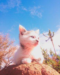 Otra foto de la hermosa Pixi!  #cat #cats #kitten #kitty #kittens #catsagram #catstagram #instagood #pet #pets #animal #animals #petstagram #petsagram #photooftheday #catsofinstagram #ilovemycat #instagramcats #nature #catoftheday #caturday #lovecats #furry #sleeping #lovekittens #adorable #catlover #instacat