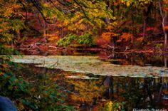 Morristown NJ  Autumns Colors