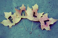 Fall Leaves Cut-out autumn leaves fall words cut out and put them in a dollar store frame