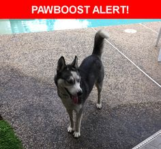 Is this your lost pet? Found in Modesto, CA 95356. Please spread the word so we can find the owner!  Description: Female, 4-5 months old, German Shepherd-Siberian Husky mix, not chipped.   Nearest Address: Carver Road, Modesto, CA, United States