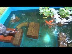大きな金魚を買いました【庭 DE アクアリウム】