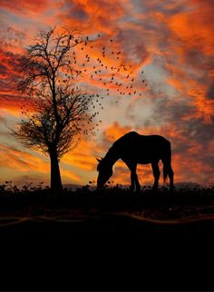 The Nicest Pictures, sunset, horse, tree, birds