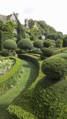 Topiary Abbey House Gardens ~ 1300 years of history, Open daily through October located in Malmesbury, England by Nigel Musgrove - Landscape Architecture, Landscape Design, Garden Design, Formal Gardens, Outdoor Gardens, Garden Cottage, Home And Garden, The Secret Garden, Topiary Garden