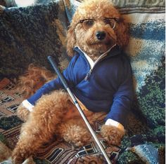 Why Samson the Goldendoodle is Breaking the Internet  - TownandCountryMag.com