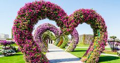 dubai flower gardens must go and see! Thanks to the little girl who showed me her show an tell!