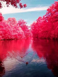 Cherry blossom river in West Virginia