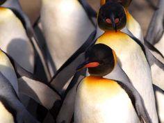Antartica Wildlife Cruise Holidays | Medway Leisure Travel