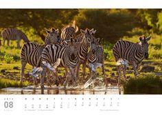 #Faszination #Afrika. By Doris Jachalke und Michael Voß. Unser #BilddesTages #Motivkalender  | https://www.viaprinto.de/motivkalender#/faszination_afrika Werbekalender, Kalender 2014, Motivkalender, Online drucken