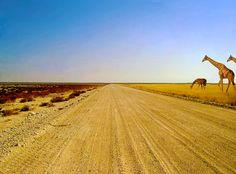 One of the many roads of the park Etosha