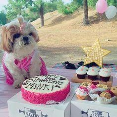 Happy birthday Minki  #thedogbakery #pupcake  Photo by @angirawr