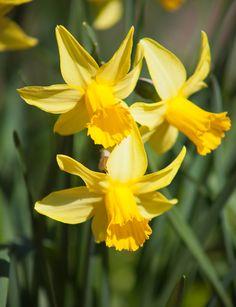 Das Blumenbeet aufpeppen - 6 schöne Deko-Tipps