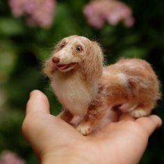 手のひらの上のオーダーわんこ♪    チョコダップルの淡〜い色みに優しい表情、ふんわりした雰囲気のミニチュアダックスちゃん😊    笑顔もちょっとひかえめです💕    Made-to-order felt miniature dachshund  (size : 9cm)    #はねつきりんご #羊毛フェルト#felt #needlefelting#オーダー品#オーダーわんこ #madetoorder  #ミニチュアダックスフンド #ダックスフンド #手のひらサイズ#チョコダップル #chocodapple #dachshund #minituredachshund #miniaturedachshund