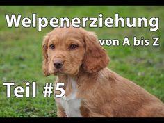 Welpenerziehung Teil #5 PLATZ bleib und FUSS - YouTube