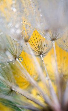 """""""Seedhead with Raindrops. Credit as"""" Bild von Danita Delimont jetzt als Poster, Kunstdruck oder Grußkarte kaufen.."""