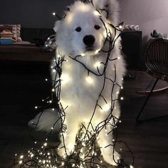 Here are 29 so funny animals pictures of the day. Don't forget to share this hilarious pictures with your friends. Cute Funny Animals, Cute Baby Animals, Animals And Pets, Cute Puppies, Cute Dogs, Dogs And Puppies, Doggies, Dachshund Puppies, Pyrenees Puppies