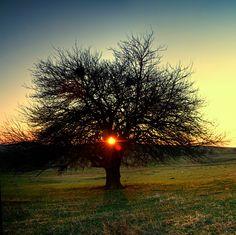 Tree of Life by iustyn on DeviantArt