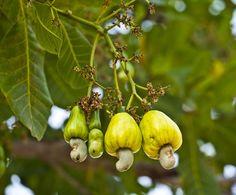 Ovocie, ktoré ste pri silvestrovskom stole určite neochutnali - Magazín