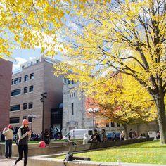 The neighborhood I live in #bostonuniversity #campuslife #campus #neighborhood #fall #boston by johnwesly