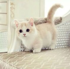 カワイイ猫画像 68 - ねこLatte+