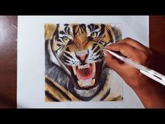 Drawing A Tiger - Animal drawing series 4 - Prismacolor pencils. - YouTube