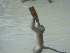 Drunk monkey phi phi