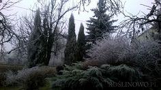 szadziowy ogród ;-)