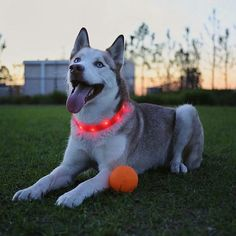 Keep your furry friends safe at night with their LED collars. Click the link in bio and order today just for 7$