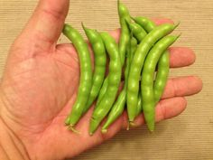 Pink Tip Greasy Bean - Sustainable Mountain Agriculture Center Berea, Kentucky