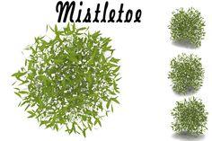Mistletoe by AndrewWhite on Creative Market