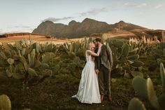 Sam & Cheree got married at one of South Africa's most amazing wedding venues and tourist attractations - the picturesque gardens of Babylonstoren Small Intimate Wedding, Intimate Weddings, Married At First, Got Married, Destination Wedding, Wedding Venues, Winter Light, Winter Garden, Cape Town