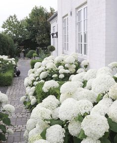 42 inspiring ideas for lovely garden landscape design from our experts 36 - garden landscaping Garden Types, Love Garden, Garden Care, Dream Garden, Home And Garden, Shade Garden, Garden Paths, Garden Bridge, Hydrangea Landscaping