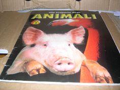 Album figurine Alla scoperta degli animali, edizioni Masters Collection, non cmp | eBay