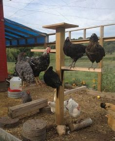 21 Awesome DIY Projects To Upgrade Your Chicken Coop 1