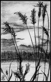 Kuvahaun tulos haulle pinterest pencil drawing ideas
