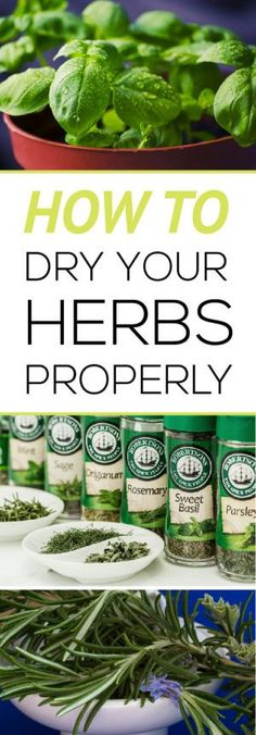 How to Dry Herbs Properly | Easily learn how to harvest and dry your own herbs properly for the best flavor!