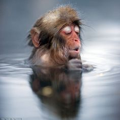 A baby snow monkey warms up in a hot spring.
