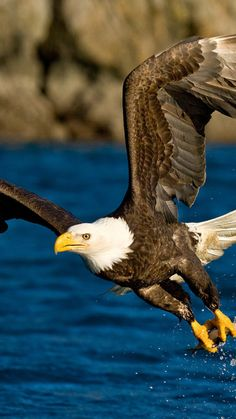 flight, wings, eagle, spray, bird, water