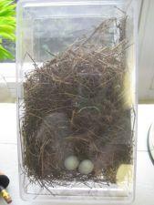 displaying nests