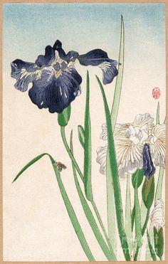 levkonoe | Nishimura Hodo