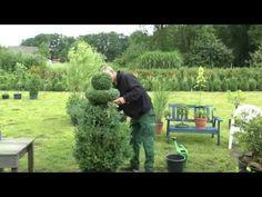 Buchsbaum Buxus Boxwood neu gestalten, re style - YouTube