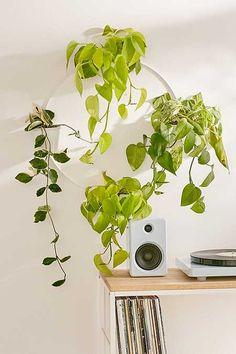 Wandhalterung für mehrere Pflanzen