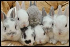 Oodles of baby bunnies!
